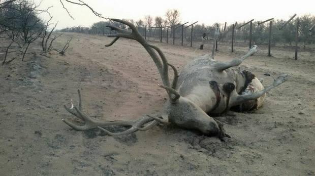 animales-incendiados